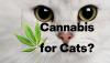 CBD, CBD Oil, Vondis, Alternative Health, Marijuana, cannabidiol, Weed, Toxic foods, Healthy foods, Cats, Cat Health