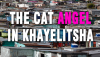 Khayelitsha Animal hospital, Mdzananda Animal Clinic, Steffi Bergman, cat rescue, kitten rescue, funds needed, animal shelter,